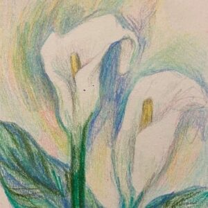 Colored pencil drawing of lilies.