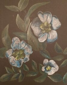 Crayon depiction of white flowers with leaves.